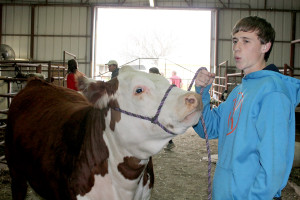 Ty Rolen received several awards at the Collin County Junior Livestock Show. He received Reserve ARB Breed Champion with his heifer Bonnie, first in class with his Red Angus Freckles and first in class with his Hereford, Miami, which is pictured with Rolen.
