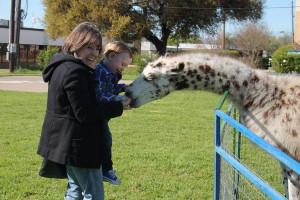 Tucker Reynolds makes friends with a llama as his grandma Darla Ball helps him feed the animal.
