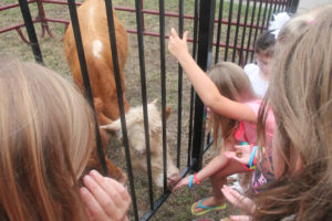 Kids of all ages gather around to feed a minature cow snacks at the final Summer Reading Club Aug. 17. Animals were brought out for the kids by Heavenly Hooves, a nonprofit located near Farmersville.