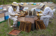 Bee-utiful business opportunity: Blue Ridge honey farm stars on NBC show