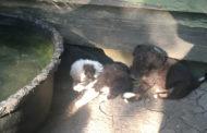 Animal cruelty arrest made