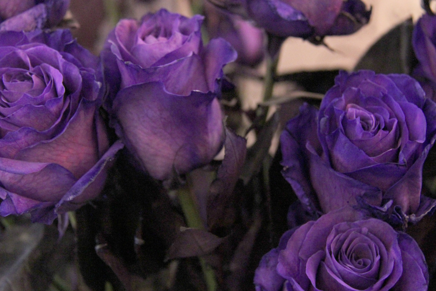 Blossoms of love: Flowers, gifts abound in downtown stores