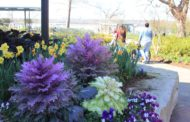 Dallas Arboretum reopens June 1